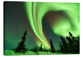 Canvas  Aurora borealis over trees - P. Marazzi
