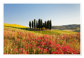 Premium poster Cypress trees in a field full of wildflowers