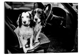 Acrylic print  dogs in the car - John Alexander