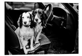 Forex  dogs in the car - John Alexander