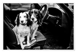 Premium poster dogs in the car