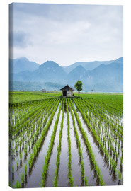 Canvas print  Small hut in rice field of Padi in Sumatra, Indonesia - John Alexander