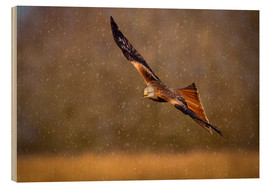 Wood print  Red kite in flight - Andrew Sproule