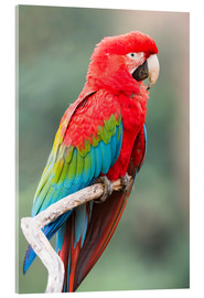Acrylic glass  Red-and-green macaw (Ara chloropterus), Buraco das Araras, Mato Grosso do Sul, Brazil, South America - G & M Therin-Weise