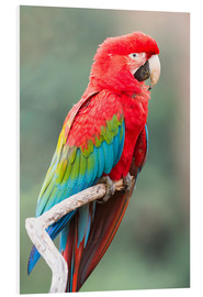 G & M Therin-Weise - Red-and-green macaw (Ara chloropterus), Buraco das Araras, Mato Grosso do Sul, Brazil, South America