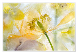 Premium poster  Welsh Poppy - Mandy Disher