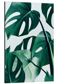 Aluminium print  Monstera - Uma 83 Oranges