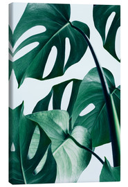 Canvas  Monstera - Uma 83 Oranges