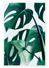 Premium poster  Monstera - Uma 83 Oranges