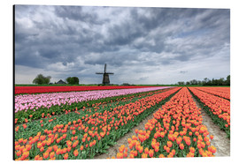 Aluminium print  Multicolored tulips and windmill - Roberto Moiola