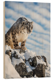 Wood print  Snow leopard (Panthera india) - Janette Hill