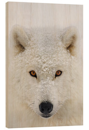 Wood  Arctic Wolf - Dominic Marcoux