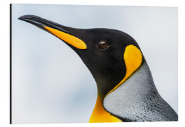 Aluminium print  King Penguin - Nick Dale