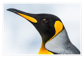 Premium poster King Penguin