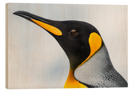 Wood print  King Penguin - Nick Dale