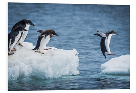 Foam board print  Adelie penguins between two ice floes - Nick Dale