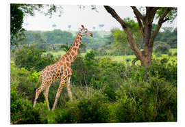 Foam board print  Giraffe in the savannah - Reynold Mainse