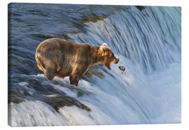Canvas print  Brown bear with jumping red salmon - Gary Schultz