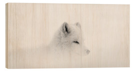 Dominic Marcoux - Arctic wolf in the snow