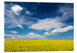 Foam board print  Flowering canola field - Michael Interisano