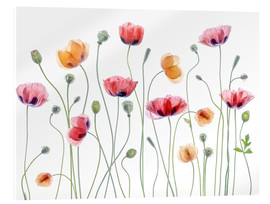 Acrylic print  Poppy party - Mandy Disher