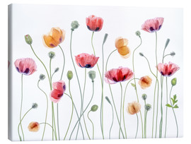 Canvas  Papaver Party - Mandy Disher