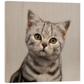 Wood  Young silver tabby cat - Simon Murrell