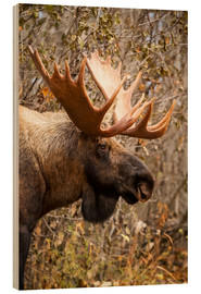 Doug Lindstrand - Moose in profile