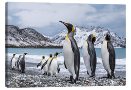 Canvas  King penguins on the beach - Deb Garside