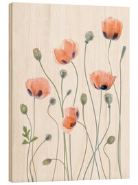 Wood  Poppy poetry - Mandy Disher