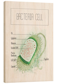 Wood  Bacteria Cell - RNDMS