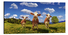Aluminium print  Cows on the pasture - Michael Rucker