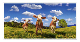 Poster  Cows on the pasture - Michael Rucker