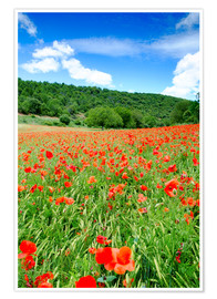 Premium poster Poppy fields near Covarrubias