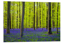Jason Langley - Bluebell flowers in early spring