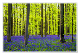 Premium poster Bluebell flowers in early spring
