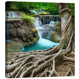 Canvas print  sprawling roots