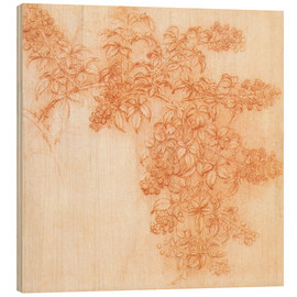 Wood print  Drawings of plants - Leonardo da Vinci