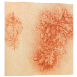 Foam board print  Branch of an oak tree - Leonardo da Vinci