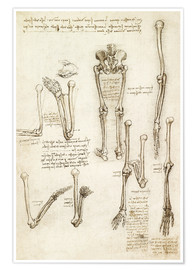 Premium poster the bones of the arm and leg
