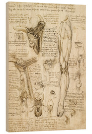 Wood print  Larynx and leg - Leonardo da Vinci