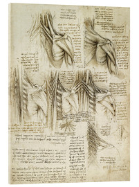 Acrylic print  Muscles of the spine - Leonardo da Vinci