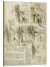 Alu-Dibond  Muscles of the Spine - Leonardo da Vinci
