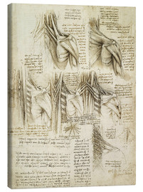 Canvas print  Muscles of the spine - Leonardo da Vinci