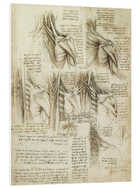 Foam board print  Muscles of the spine - Leonardo da Vinci