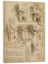 Wood print  Muscles of the spine - Leonardo da Vinci