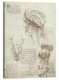 Canvas  Brain and Skull - Leonardo da Vinci