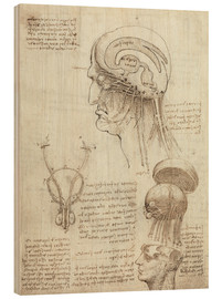Wood print  Brain and skull - Leonardo da Vinci