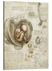 Alu-Dibond  Studies Of Embryos - Leonardo da Vinci