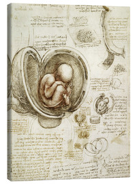Canvas  Studies Of Embryos - Leonardo da Vinci